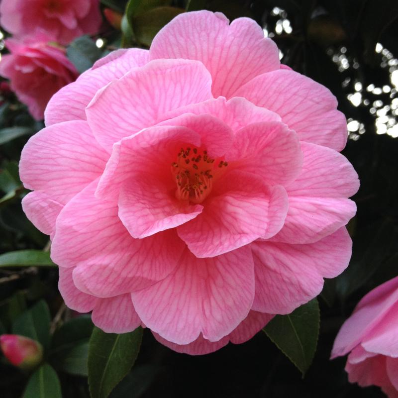Dawn Perkins Garden Design 2